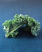 A leaf of kale