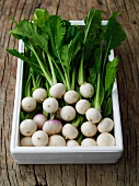 Box of Baby Turnips