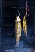 Trout and char in a smoking oven