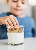 Boy (4-5) dipping cookie in milk