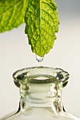 Studio shot of liquid falling from leaf into bottle