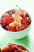 Red and White Currants in a Bowl with Cherries
