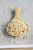 Einkorn wheat on a wooden spoon