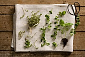 Fresh herbs on a white tea towel