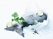 A fresh fish in paper on ice