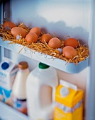 Freshly laid eggs in straw in refrigerator