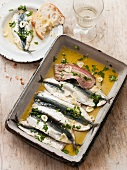 Preserved sardines with olive oil, garlic and herbs