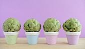 Four mini artichokes in small flowerpots