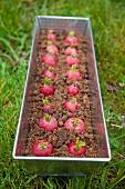 Radish cake in the tin in a meadow