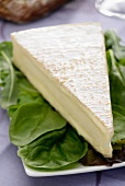 A slice of Brie de Meaux on spinach leaves