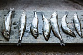 A Row of Seven Fresh Sardines on Slate