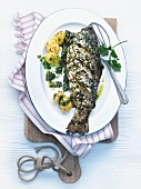 Odenwald salmon trout with herb sauce and boiled potatoes