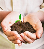 A man's hands holding a seedling