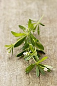 Fresh woodruff on a wooden surface