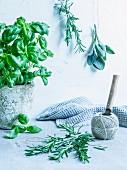 Fresh herbs: basil, rosemary, sage