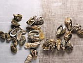 Verschiedene Austernsorten (Aufsicht)