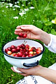 Young woman holding a colander with sweet cherries