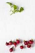 Several radishes and radish leaves