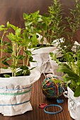 Assorted herbs in pots wrapped with paper and elastic bands as gifts