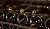 Champagne fermenting in bottles according to the champenoise method