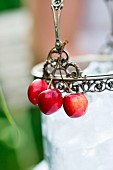 Cherries hanging on an ice bucket