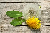 A dandelion flower, a dandelion clock and leaves on a wooden surface