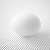 A white egg on a white textured background