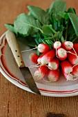 Fresh radishes in a bunch