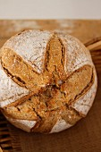 Rustic wholemeal bread
