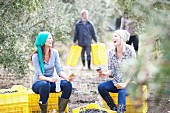 Two women sitting on crates having a break from the olive harvest