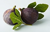 Two figs with fig leaves