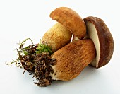 A porcini mushroom and a bay bolete