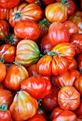 Lots of Oxheart tomatoes (filling the image)