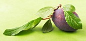 A plum with leaves