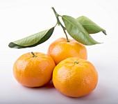 Three mandarin oranges