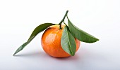 A mandarin with mandarin leaves