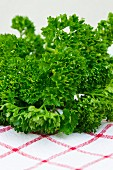 Curly-leaf parsley (close-up)