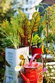 Gemüsepflanzen und Giesskanne auf dem Balkon