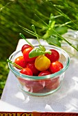 Cherry tomatoes on skewers at a picnic