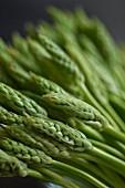 Green wild asparagus (close-up)