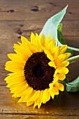 Sunflower on wooden surface