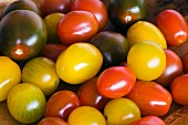Yellow, red and black cherry tomatoes (filling the image)