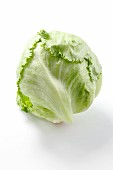 An iceberg lettuce against a white background