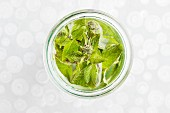 Fresh mint in a preserving jar with water (view from above)