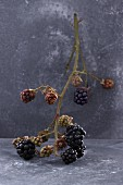A spray of blackberries