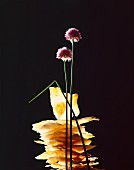 A still life featuring sheets of filo pastry and chive flowers, against a black background