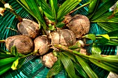 Coconuts in a basket (view from above)