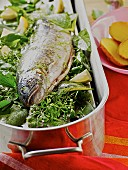 Trout in a bed of herbs