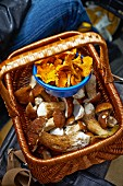 Fresh porcini mushrooms and chanterelles in a basket