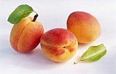 Three apricots with leaves